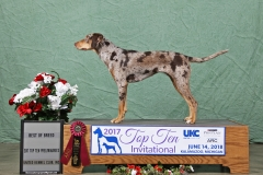 Drama Top Ten Best of Breed