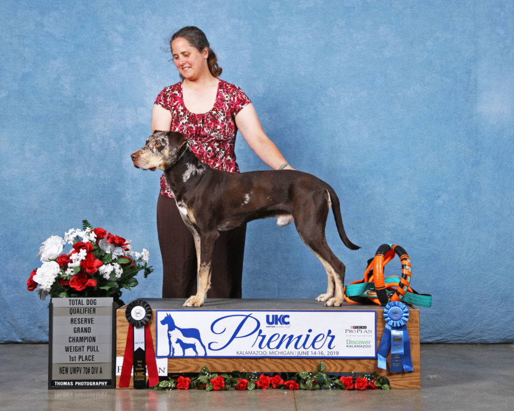 Trek earned his second Total Dog at the 2019 Premier.